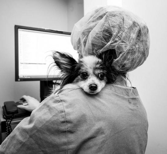 Alltag in der Tierklinik